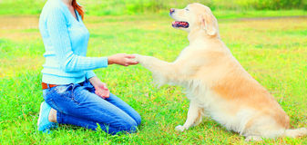 Owner woman is training Golden Retriever dog on the grass Royalty Free Stock Photo