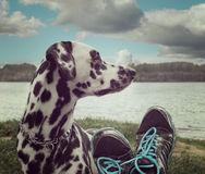 Owner's foots next to the dog -- friendship Stock Images