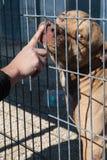 Ownerless λυπημένο σκυλί Στοκ φωτογραφίες με δικαίωμα ελεύθερης χρήσης