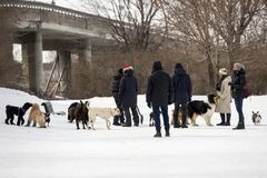 Owners and different breeds of dogs standing in snow in dog park stock images