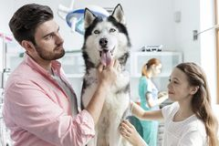 Owners stroking husky at veterinary clinic stock photos