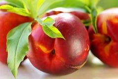 owoc świeża zieleń opuszczać brzoskwinię Fotografia Stock