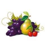 owoc royalty ilustracja