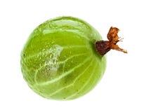 owoc agrest odizolowywał jeden Fotografia Stock