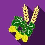 Owoc chmielowa i ucho jęczmień na purpurowym tle z długim cieniem Zdjęcie Stock