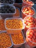 Owoc czernica, denni buckthorns i różani biodra, Fotografia Stock