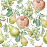 owoc deseniują bezszwowego Apple, winogrona i bonkreta, beak dekoracyjnego latającego ilustracyjnego wizerunek swój papierowa kaw Obrazy Royalty Free
