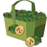Owoc feijoas egzota zieleni feijoa Zdjęcie Royalty Free