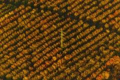 Owoc gospodarstwo rolne i wysokie woltaż linie na powietrznej fotografii obrazy stock