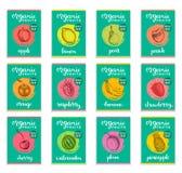 Owoc i jagody kreślić karty Ręki rysować etykietki ustawiać dla pakować etc Wektorowe ilustracje organicznie, eco jedzenie Obrazy Royalty Free
