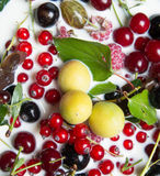 Owoc i jagody w mleku Obraz Stock