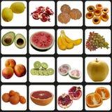 Owoc inkasowe. Zdjęcie Stock