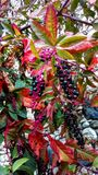 Owoc jesień Fotografia Stock