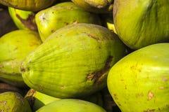 Owoc kokosowa palma Obraz Royalty Free