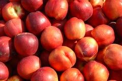 owoc lato Obraz Stock