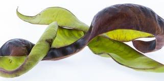 Owoc miodowa szarańcza Zdjęcie Stock
