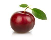 owoc odosobnionych śliwek dojrzały biel obrazy stock
