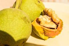 Owoc orzech włoski Zdjęcie Stock