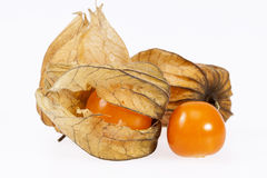 Owoc pęcherzyca odizolowywająca na białym backgroud (pęcherzycy peruviana) Obraz Royalty Free