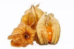Owoc pęcherzycy pęcherzycy peruviana odizolowywający na białym tle Obraz Royalty Free