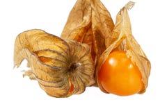 Owoc pęcherzycy pęcherzycy peruviana odizolowywający na białym tle Fotografia Royalty Free