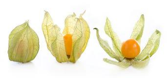 owoc pęcherzyca Obraz Stock