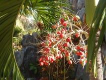 Owoc palma, Wietnam, MUI ne Zdjęcie Royalty Free
