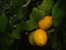 Owoc po deszczu obrazy stock