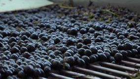 Owoc przechodzą dalej rozedrganego stół zbiory