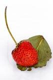 Owoc, truskawkowa czerwień Zdjęcia Royalty Free
