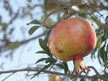 Owoc w Azja Fotografia Stock