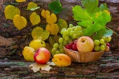 Owoc w uprawie jesień Obraz Stock