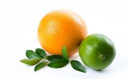 Owoc Wapno i zieleń nowi liście Zdjęcia Stock