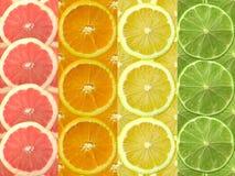 owoce cytrusowe Obraz Royalty Free