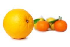 owoce cytrusowe cytryn lime pomarańcze Pomarańcze, tangerines i cytryny na białym backgr, zdjęcie royalty free