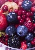owoce jagodowe czarnych Obraz Stock