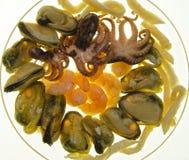 Owoce morza Zdjęcie Stock