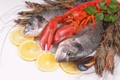 owoce morza zdjęcie royalty free