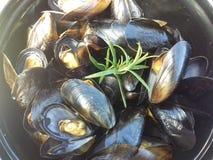 Owoce morza mussel przygotowywający jeść Zdjęcie Stock