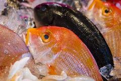 Owoce morza restauracje, świeży owoce morza, różnorodność rybi shellfish, Tajwański ` s owoce morza sklep, Obraz Royalty Free