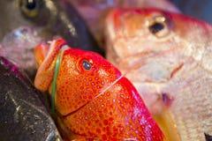 Owoce morza restauracje, świeży owoce morza, różnorodność rybi shellfish, Tajwański ` s owoce morza sklep, Fotografia Royalty Free
