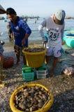 Owoce morza rynek na plaży Fotografia Stock