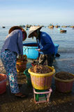 Owoce morza rynek na plaży Fotografia Royalty Free
