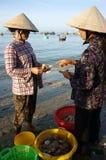 Owoce morza rynek na plaży Zdjęcie Stock