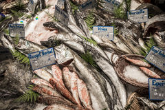 Owoce morza w Victor Hugo rynku Obraz Stock