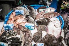 Owoce morza w Victor Hugo rynku Zdjęcia Stock