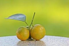 owoce pomarańczowe Obraz Royalty Free