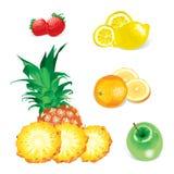owoce wektorowe ilustracja wektor