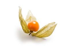 owocowa pęcherzyca Obraz Royalty Free