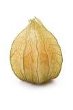 owocowa pęcherzyca Zdjęcie Stock
